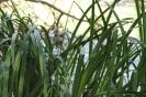 """Растителни видове в ПР """"Сребърна"""""""
