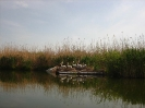 Млади пеликани