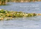 Старо езеро..._1