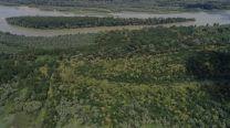 """Инвазивни растителни видове ще бъдат премахнати от територията на резервата """"Сребърна"""""""