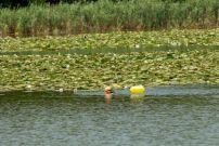 Езерото Малък Преславец беше преплувано с благотворителна цел