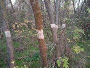 """Приключи дейността по ограничаване разпространението на инвазивни растителни видове в резервата """"Сребърна"""""""